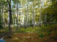 Фотографии живописных окрестностей Санатория Октябрьское ущелье